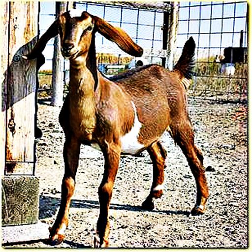 山羊-一个古老的动物的声音
