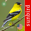 Bird Song Id USA Automatic Recognition and Reference - Songs and Calls of East America
