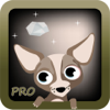Louise Gow - Henry the Chihuahua Pro artwork