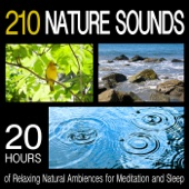210 Nature Sounds: 20 Hours of Relaxing Natural Ambiences for Meditation and Sleep
