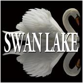 Swan Lake Op. 20: Dance of the swans