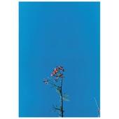 Joanna Newsom & The Y's Street Band - EP - Joanna Newsom Cover Art