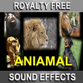 Royalty Free Animal Sound Effects