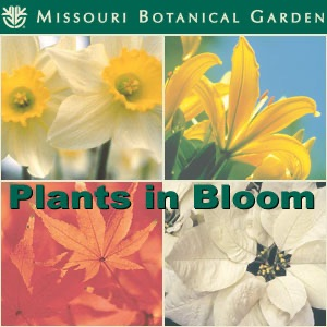 Missouri Botanical Garden Plants in Bloom