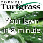 Your lawn in a minute