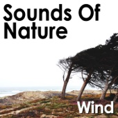 Wind On the Sand Dunes