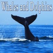 Nature Sounds - Whales and Dolphins - Sounds of Nature artwork