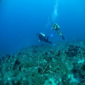 台灣海洋生態頻道
