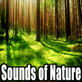 Relax Sounds of Nature