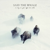 As Long as Your Eyes Are Wide, Said The Whale