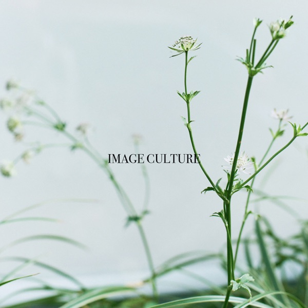 Image Culture
