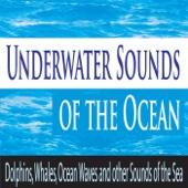 Sandy Beach Sounds