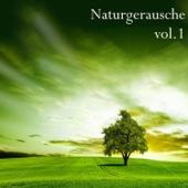 [Download] Vogelstimmen MP3