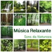 Música Relaxante – Música New Age Para Meditação Ioga, Reiki, Ayurveda, Sono Profundo, Estudo, Leitura, Concentração, Aprendizagem, Massagens E Spa, Adormecer
