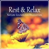 Rest & Relax: Nature Sounds for Relaxation, Pure Massage, Music for Healing Meditation, Reiki, Yoga & Deep Sleep - Oasis of Relaxation