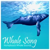 [Download] Humpback Whale Sounds MP3