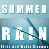 Summer Rain, Birds and Water Streams