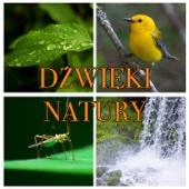Dźwięki Natury – Muzyka Relaksacyjna Z Rdzennym Amerykańskim Fletem W Tle, Masaż I Spa, Reiki, Joga, Muzyka Do Snu, Skupienie I Medytacja
