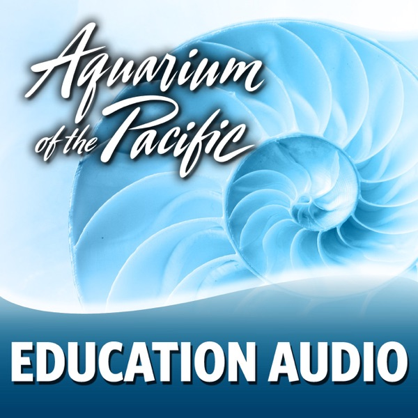 Education Audio