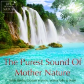 The Purest Sound of Mother Nature – Birds, Ocean Waves, Waterfalls, Rain