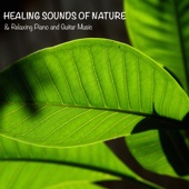 Sounds of Nature White Noise for Mindfulness Meditation and Relaxation - Healing Sounds of Nature & Relaxing Piano and Guitar Music for Meditation, Yoga, Relax and Sleep  artwork