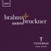 Tenebrae & Nigel Short - Brahms & Bruckner: Motets  artwork