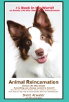Animal Reincarnation  Animal Life After Death Answers For Your Hearts Questions