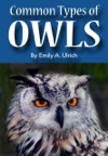 Common Types Of Owls