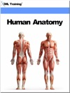 Human Anatomy Human Body