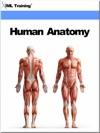 Human Anatomy Human Body