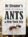 Dr Eleanors Book Of Common Ants Of New York City