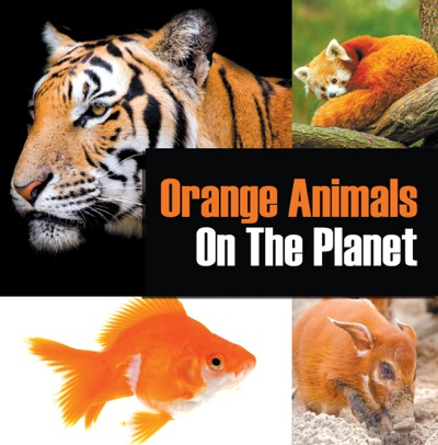 Orange Animals On The Planet