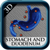 Stomach and Duodeno