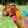 Farm Animals Balloons Pop For Kids