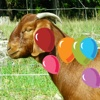 Farm Animals Balloons Pop For Kids
