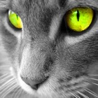 Cat Breeds Wallpapers HD+ icon