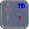 3D Human Circulation System And Heart Circulation HD