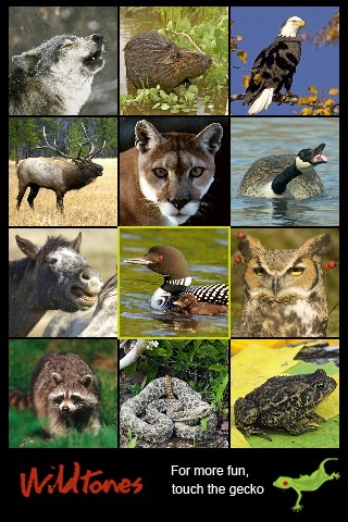 Wild Animals Wildtones screenshot 1