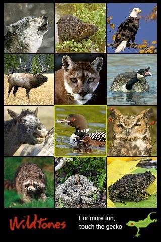 Wild Animals Wildtones screenshot 1