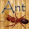 Ant Crusher Game HD
