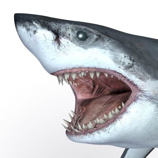 Talking Great White HD - for iPad iOS App