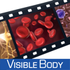 Physiology Animations - Visible Body