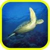 Sea Animals of Planet Earth