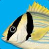Peixes Marinhos - Guia de Identificação para iPad