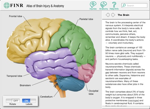 refection on body atlas the brain