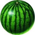 Fruit Paint icon