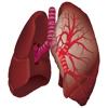 肺の聴診-vandFald.net