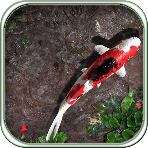 Pocket Pond iOS App