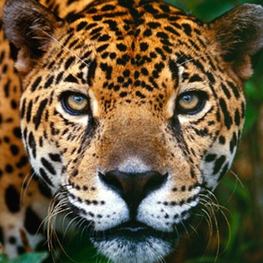 Animal Picture Mosaic Top iOS App
