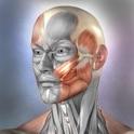 Muscle & Bone Anatomy 3D icon